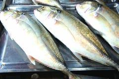 Till salu färgrik fisk Arkivbilder