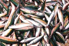 Till salu färgrik fisk Arkivfoton