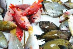 Till salu färgrik fisk Royaltyfria Bilder