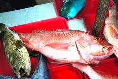 Till salu färgrik fisk Royaltyfri Foto