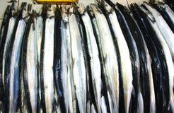 Till salu färgrik fisk Fotografering för Bildbyråer
