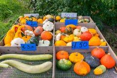 Till salu färgrika fruktkalebasser och pumpor royaltyfria bilder