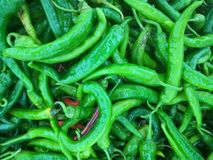 Till salu gröna Chilies Royaltyfria Bilder