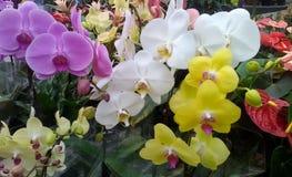 Till salu härliga orkidér royaltyfri fotografi