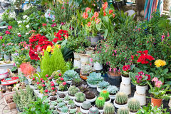 Till salu inomhus växter royaltyfri bild