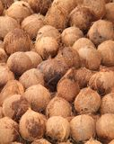 Till salu kokosnötter. Arkivfoto