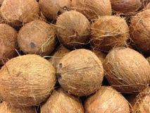 Till salu kokosnötter Arkivfoto