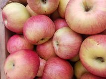 Till salu läckra mogna äpplen royaltyfri fotografi