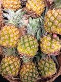 Till salu Mini Pineapples Arkivbilder