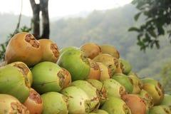 Till salu mjuk kokosnöt Arkivfoton