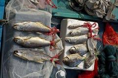 Till salu ny fisk Arkivbild