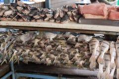 Till salu ny fisk Arkivbilder
