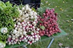Till salu ny jordbruksprodukter Fotografering för Bildbyråer