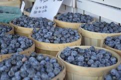 Till salu nya blåbär Royaltyfria Bilder