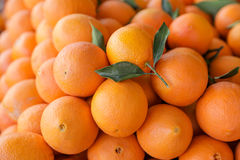 Till salu nya mogna apelsiner Arkivfoto