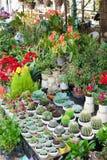 Till salu olika inomhus växter Arkivfoton