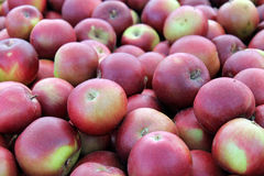 Till salu röda äpplen Arkivbilder