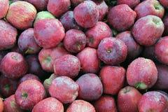 Till salu röda äpplen Arkivfoto