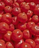 Till salu röda nya tomater Fotografering för Bildbyråer