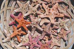 Till salu sjöstjärna- och snäckskalsouvenir Fotografering för Bildbyråer