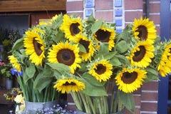 Till salu solrosor Royaltyfria Bilder