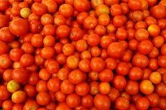 Till salu tomat Arkivbild