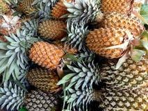 Till salu tropisk frukt av ananas royaltyfri bild