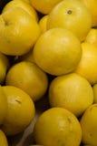 Till salu Valencia apelsiner Royaltyfria Bilder