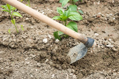 Till the soil Royalty Free Stock Photos