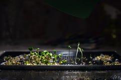 Tillagd belysning för natt av microclinetabelllampan Arkivfoto