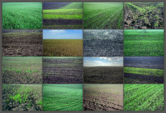 Tillage field Stock Images