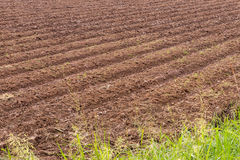 Tillage preparation plant. View the background surface soil that was plowing a furrow in preparation for planting crops Stock Image