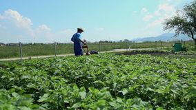 Tillage of small land stock footage