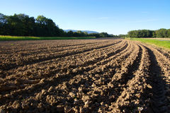 Tillage to horizont. Field tillage diminishing to horizon, with forest and blue sky, in evening light Royalty Free Stock Image