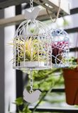 Tillandsia in de decoratie van de vogelkooi in de kleine tuin stock fotografie