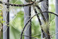 Tillandsia im kleinen Garten am Balkon Lizenzfreie Stockfotos