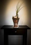 Tillandsia plant terrarium Royalty Free Stock Photo