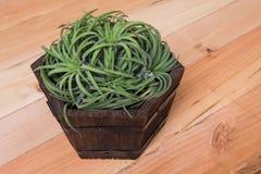 Tillandsia in vaso di legno fotografia stock