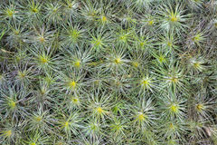 Tillandsia on the wall. Set of Tillandsia plants on the wall stock photography