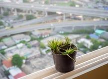 Tillansia lotnicza roślina na budynku widoku tle Zdjęcia Stock