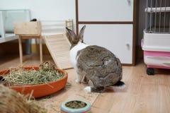 Tillbaka av kaninen arkivbild
