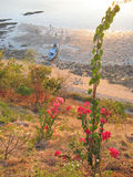 tillbaka bajostrandflores blommar det tropiska indonesia labuan havet Royaltyfria Bilder