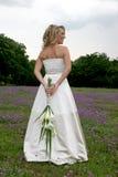 tillbaka bukett Royaltyfria Bilder