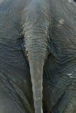 tillbaka elefant Arkivfoton