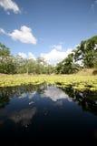 tillbaka florida vatten Fotografering för Bildbyråer