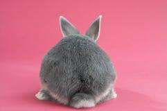 tillbaka kanin Arkivfoto
