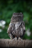 tillbaka owl Royaltyfri Fotografi
