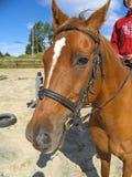 Tillbaka ridning för häst Royaltyfria Foton