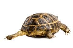 tillbaka s-sköldpadda Arkivfoto