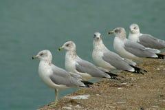 tillbaka seende seagull Arkivfoton